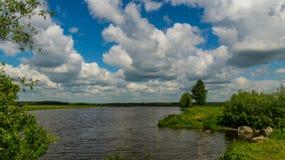 Речной берег с вегетацией в дне лета солнечном стоковое фото rf