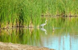 Речной берег с отражением деревьев в воде, дне лета солнечном стоковые изображения rf