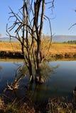 Речной берег 4 Стоковые Фото