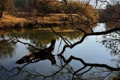 Речной берег 2 Стоковое Изображение RF