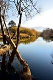 Речной берег 1 Стоковая Фотография RF