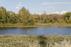 Речной берег Стоковая Фотография