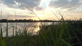 Речной берег Dnipro покрытый с зеленым заболоченным местом, тросточкой, Reed, на заходе солнца акции видеоматериалы