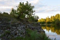 Речной берег Plyussa Стоковое фото RF