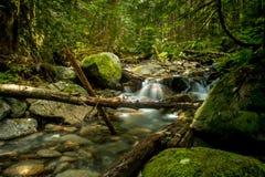 Речные берега Вашингтона стоковая фотография