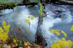 Речные пороги вздутых потоков реки над упаденный вносят дальше осень в журнал Стоковое Изображение RF