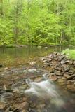 Речные пороги в древесинах. Стоковое Изображение