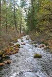 Речные пороги реки белой воды Стоковая Фотография RF