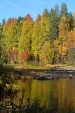 Речные пороги Koiteli в падении Цветы осени стоковые фото