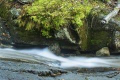 Речные пороги Swiftwater падают с мхом и папоротниками в Franconia Notc Стоковое Изображение RF