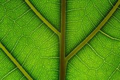 решетка естественная Стоковые Изображения RF