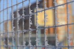 Решетка заключая земное спорт в изморозь и снег Русская зима 2018 стоковые изображения