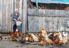 решетка фермы цыпленка младенца сверх стоковые фото