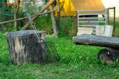Решетка для гриля отдыхает на пне Стоковые Изображения