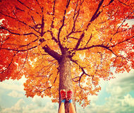 Релаксация в осени Стоковое фото RF