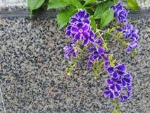 Редкие фиолетовые wildflowers Стоковая Фотография