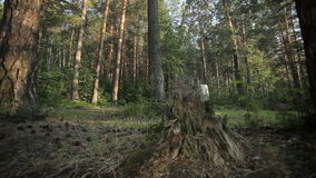 Редкий виллис управляя на дороге леса акции видеоматериалы