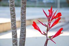 Редкий цветок принятый на Ipanema стоковое изображение