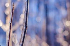 Редкий шторм льда в Онтарио создает красивую сцену зимы Стоковое Фото