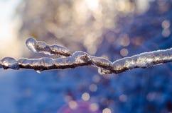 Редкий шторм льда в Онтарио создает красивую сцену зимы Стоковое Изображение