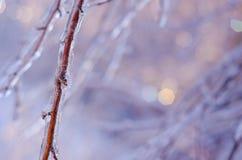 Редкий шторм льда в Онтарио создает красивую сцену зимы Стоковые Изображения RF
