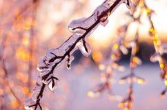Редкий шторм льда в Онтарио создает красивую сцену зимы Стоковая Фотография