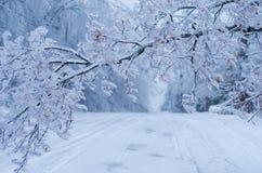 Редкий шторм льда в Онтарио создает красивую сцену зимы Стоковое фото RF