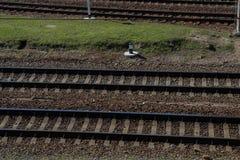 Рельсовый путь Стоковое фото RF