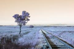 Рельсы и деревья водя к нигде Стоковые Фото