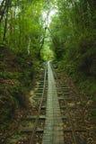Рельс леса Стоковые Фотографии RF