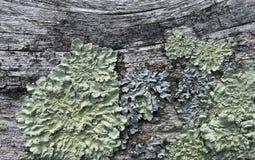 Рельс загородки с ростом лишайника или грибка Стоковое Изображение