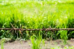 Ржавая загородка колючей проволоки стоковое фото
