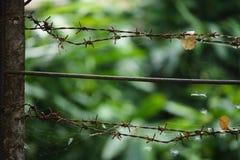 Ржавая загородка терния стоковая фотография