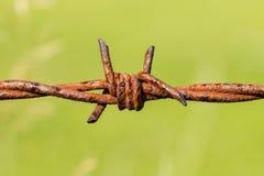 Ржавая колючая проволока Стоковое Фото