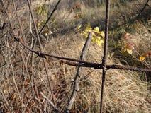 Ржавая проволочная изгородь на предпосылке стоковое фото
