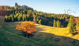 Ржавое дерево Стоковое Фото