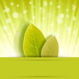 Ржавчина лист Стоковые Изображения RF