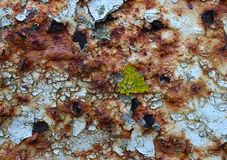 Ржавчина, лишайник и облупленная краска Стоковое фото RF