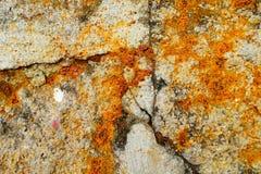 Ржавчина на поле цемента стоковые фотографии rf