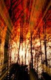 Ржавчина цвета захода солнца восхода солнца деревьев Sihlouetted леса фантазии глубокая Стоковое Изображение RF