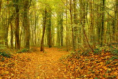 Ржавые листья в осени Стоковое Фото