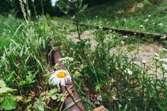 ржавые рельсы и деревянные слиперы в зеленой траве стоковые изображения rf