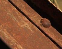 Ржавый болт Стоковая Фотография RF