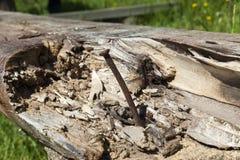 ржавый металлический ноготь стоковая фотография rf