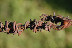 Ржавый металл конца колючей проволоки вверх переплетенный Стоковое Изображение RF