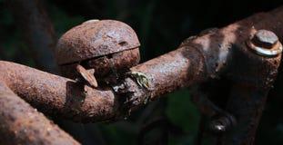 Ржавый старый колокол велосипеда Стоковые Фото