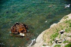 Ржавый утюг в зеленом море стоковые фотографии rf