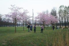 РИГА, ЛАТВИЯ - 24-ОЕ АПРЕЛЯ 2019: Люди в парке победы наслаждаясь вишневым цветом Сакуры - каналом города с летанием чайок стоковое изображение