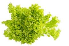 Римский салат стоковое изображение rf