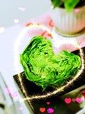 Римское сформированное сердце салата Стоковые Изображения RF
